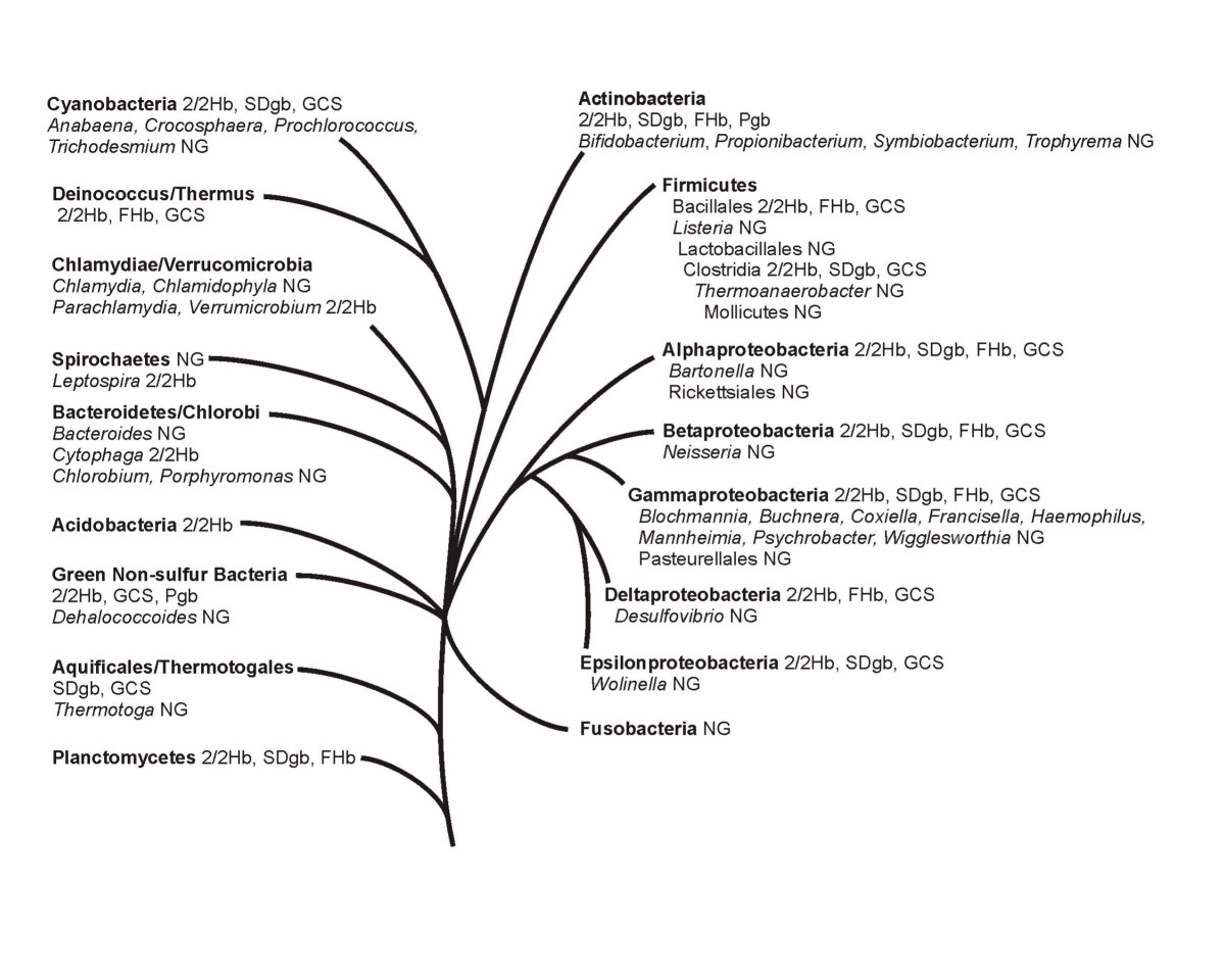 http://static-content.springer.com/image/art%3A10.1186%2F1471-2148-6-31/MediaObjects/12862_2005_Article_216_Fig3_HTML.jpg