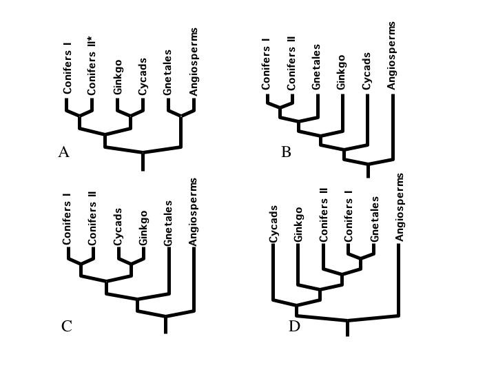 http://static-content.springer.com/image/art%3A10.1186%2F1471-2148-6-48/MediaObjects/12862_2006_Article_233_Fig1_HTML.jpg