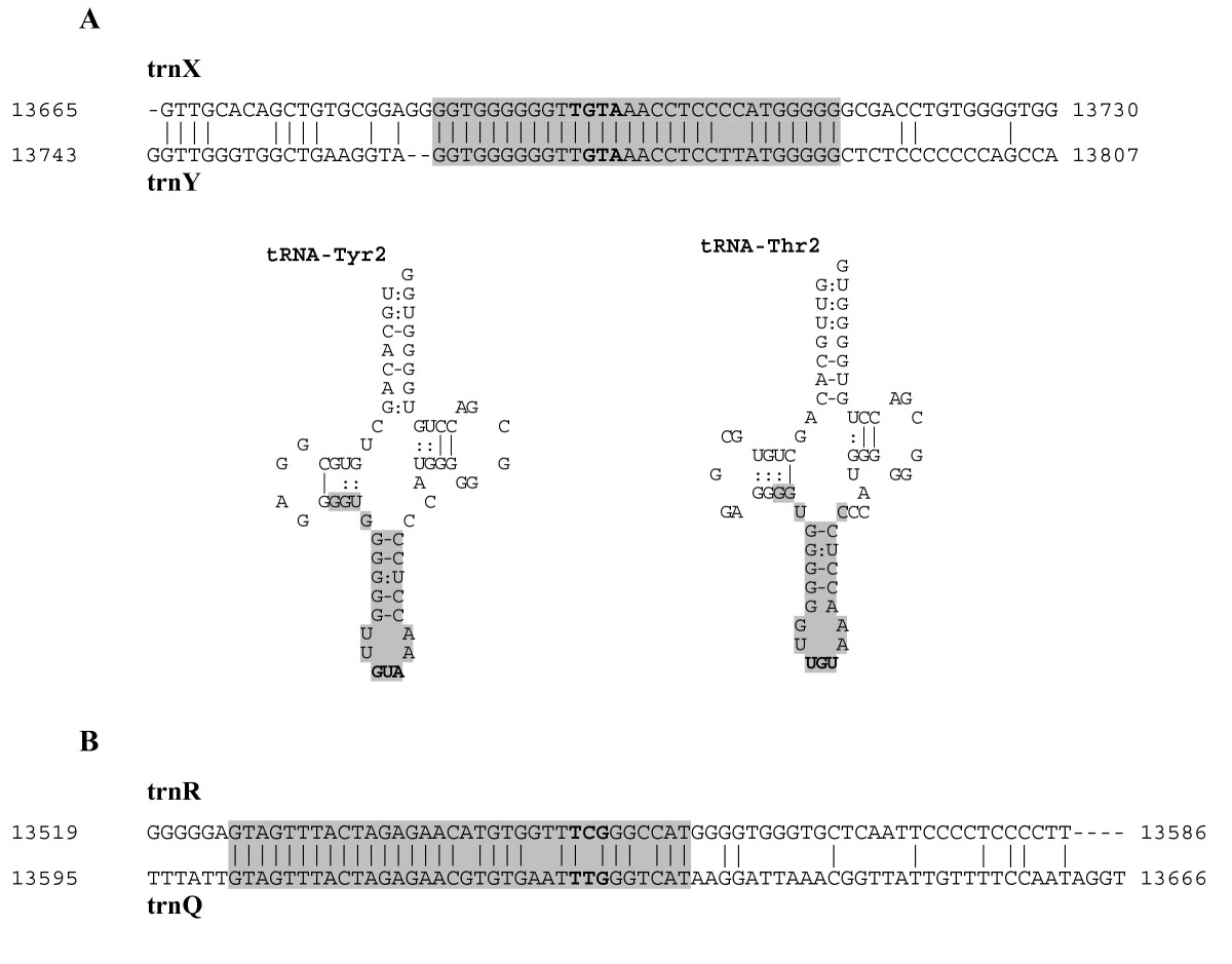 http://static-content.springer.com/image/art%3A10.1186%2F1471-2148-7-155/MediaObjects/12862_2007_Article_446_Fig5_HTML.jpg