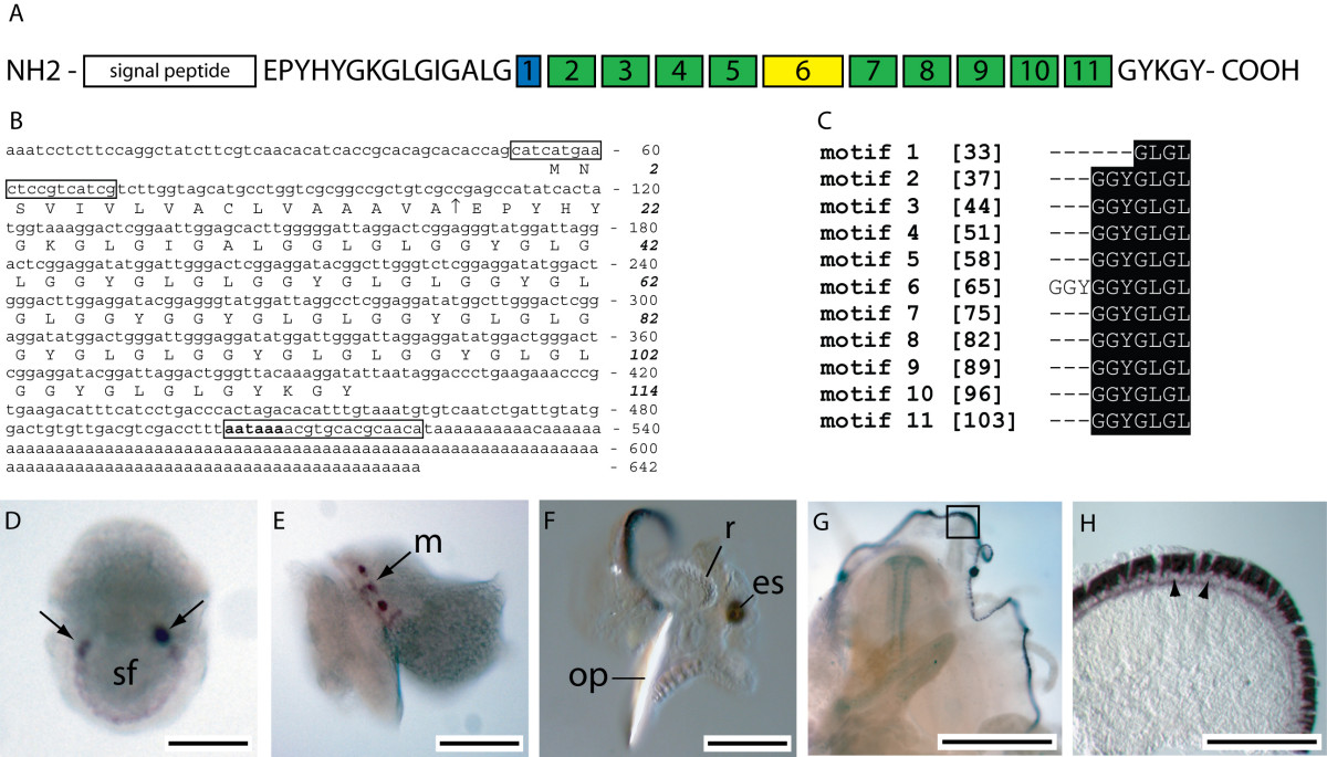 http://static-content.springer.com/image/art%3A10.1186%2F1471-2148-7-160/MediaObjects/12862_2006_Article_451_Fig6_HTML.jpg