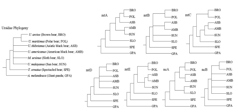 http://static-content.springer.com/image/art%3A10.1186%2F1471-2148-7-198/MediaObjects/12862_2007_Article_489_Fig1_HTML.jpg