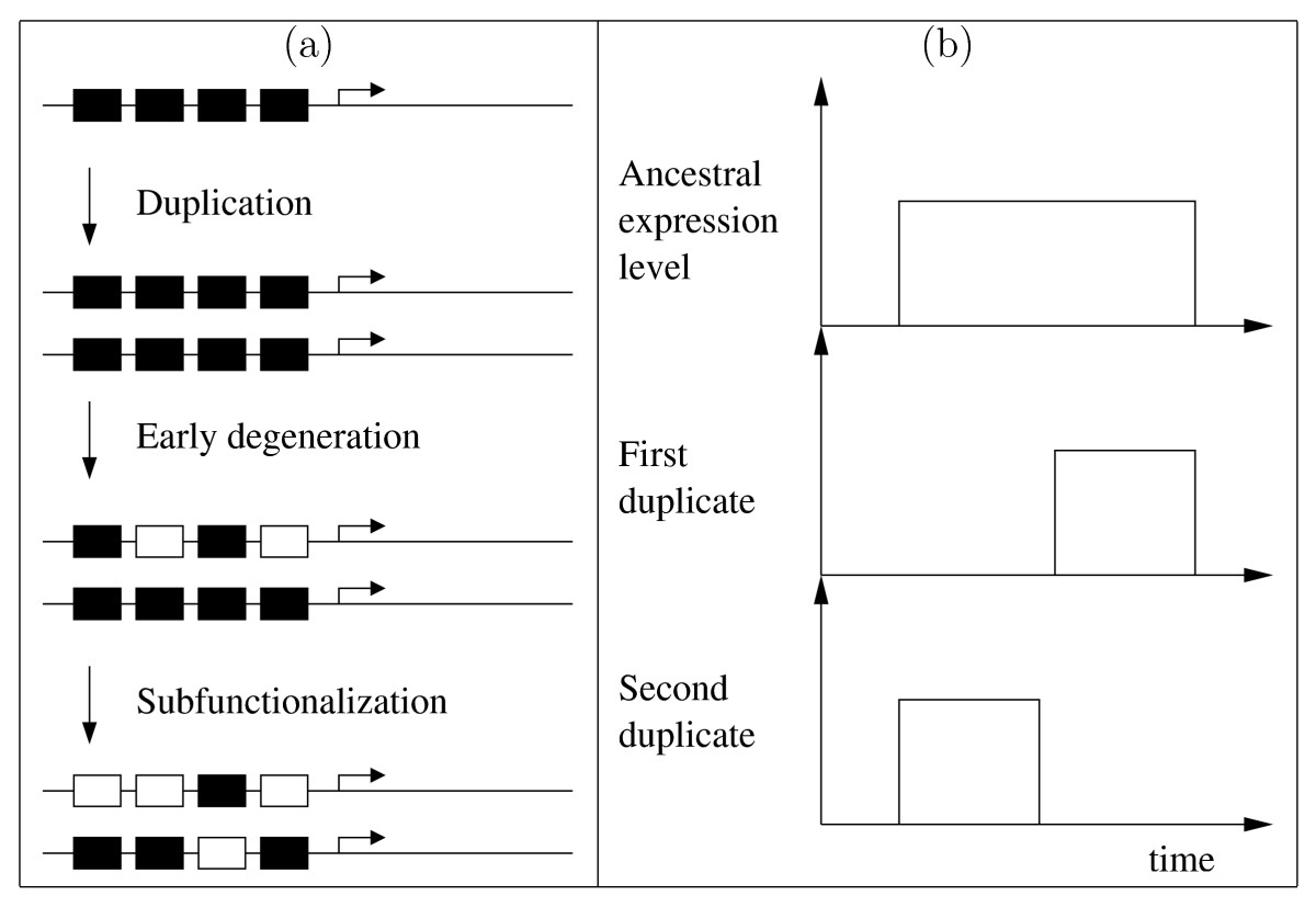 http://static-content.springer.com/image/art%3A10.1186%2F1471-2148-7-213/MediaObjects/12862_2007_Article_504_Fig1_HTML.jpg