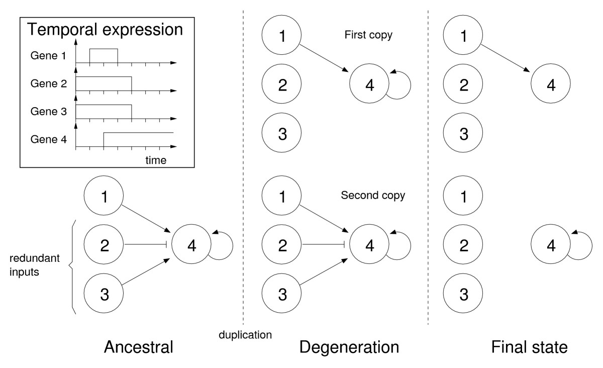 http://static-content.springer.com/image/art%3A10.1186%2F1471-2148-7-213/MediaObjects/12862_2007_Article_504_Fig4_HTML.jpg