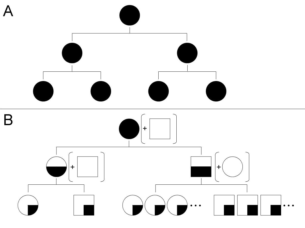 http://static-content.springer.com/image/art%3A10.1186%2F1471-2148-7-245/MediaObjects/12862_2007_Article_536_Fig1_HTML.jpg