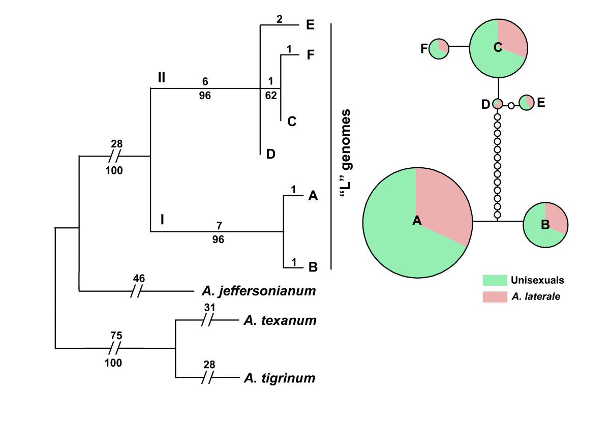 http://static-content.springer.com/image/art%3A10.1186%2F1471-2148-8-158/MediaObjects/12862_2008_Article_727_Fig3_HTML.jpg