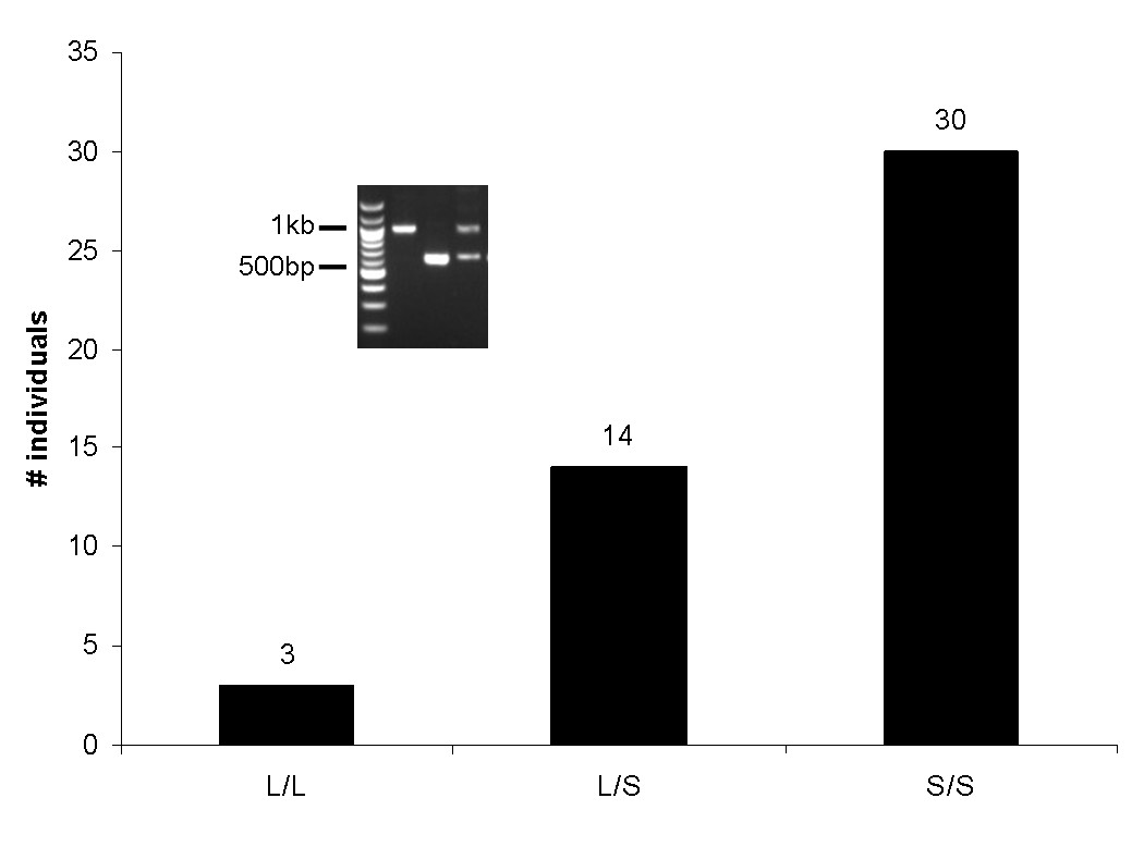 http://static-content.springer.com/image/art%3A10.1186%2F1471-2148-8-180/MediaObjects/12862_2008_Article_749_Fig4_HTML.jpg