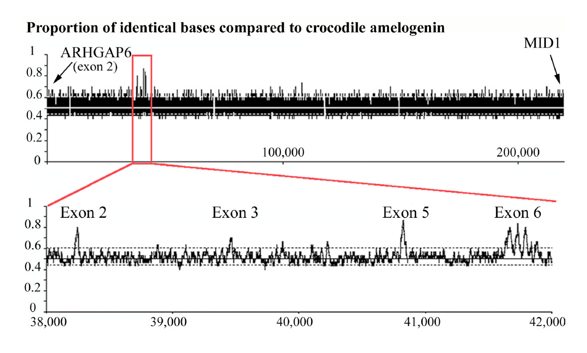 http://static-content.springer.com/image/art%3A10.1186%2F1471-2148-8-246/MediaObjects/12862_2008_Article_815_Fig2_HTML.jpg