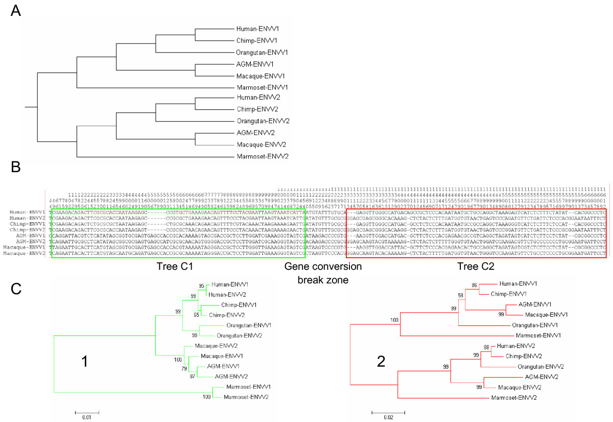 http://static-content.springer.com/image/art%3A10.1186%2F1471-2148-8-266/MediaObjects/12862_2008_Article_835_Fig3_HTML.jpg