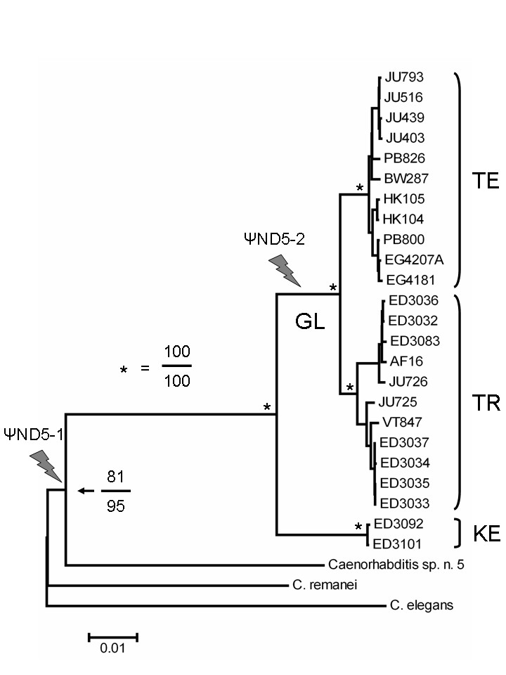 http://static-content.springer.com/image/art%3A10.1186%2F1471-2148-8-62/MediaObjects/12862_2007_Article_631_Fig2_HTML.jpg