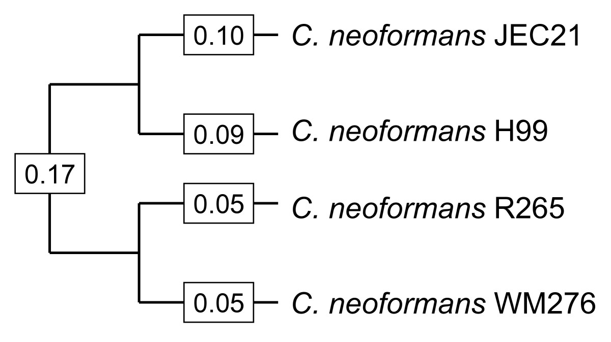 http://static-content.springer.com/image/art%3A10.1186%2F1471-2148-9-192/MediaObjects/12862_2008_Article_1106_Fig1_HTML.jpg