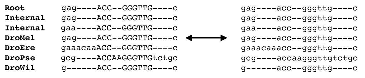 http://static-content.springer.com/image/art%3A10.1186%2F1471-2148-9-217/MediaObjects/12862_2008_Article_1131_Fig8_HTML.jpg
