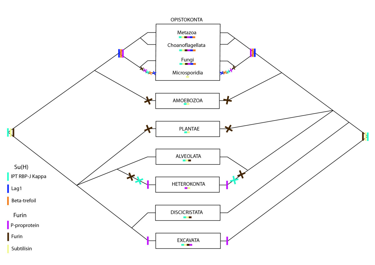 http://static-content.springer.com/image/art%3A10.1186%2F1471-2148-9-249/MediaObjects/12862_2009_Article_1163_Fig12_HTML.jpg