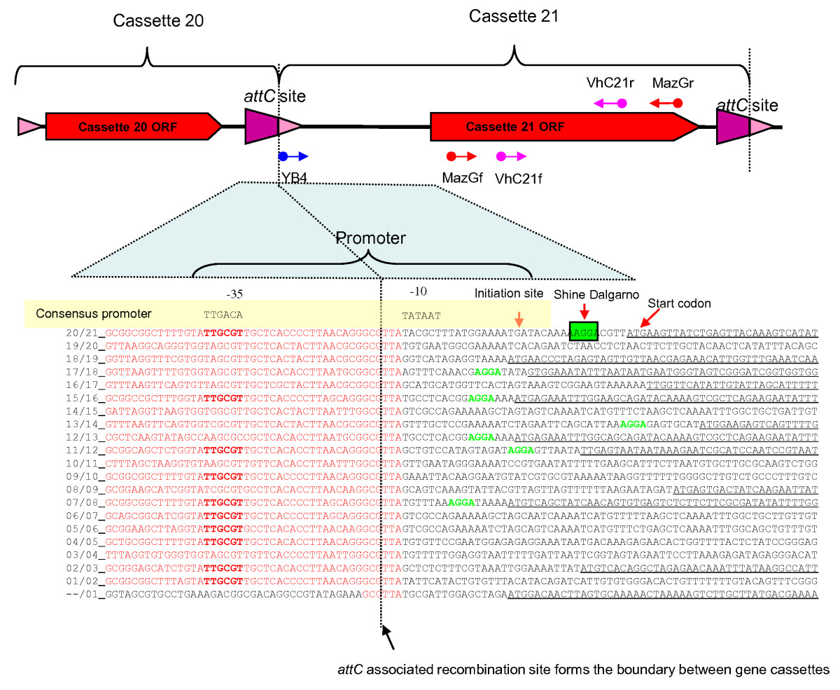 http://static-content.springer.com/image/art%3A10.1186%2F1471-2156-11-82/MediaObjects/12863_2010_Article_829_Fig8_HTML.jpg
