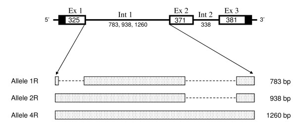 http://static-content.springer.com/image/art%3A10.1186%2F1471-2156-12-22/MediaObjects/12863_2010_884_Fig6_HTML.jpg