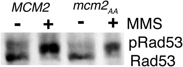http://static-content.springer.com/image/art%3A10.1186%2F1471-2156-13-36/MediaObjects/12863_2012_1050_Fig2_HTML.jpg