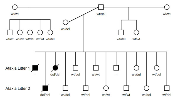 http://static-content.springer.com/image/art%3A10.1186%2F1471-2156-13-55/MediaObjects/12863_2012_1000_Fig6_HTML.jpg