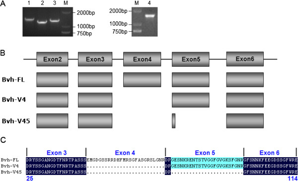 http://static-content.springer.com/image/art%3A10.1186%2F1471-2156-14-58/MediaObjects/12863_2012_1130_Fig4_HTML.jpg