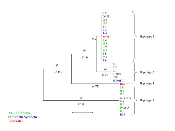 http://static-content.springer.com/image/art%3A10.1186%2F1471-2156-3-19/MediaObjects/12863_2002_Article_45_Fig4_HTML.jpg