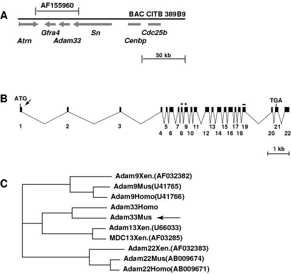 http://static-content.springer.com/image/art%3A10.1186%2F1471-2156-3-2/MediaObjects/12863_2001_Article_28_Fig1_HTML.jpg