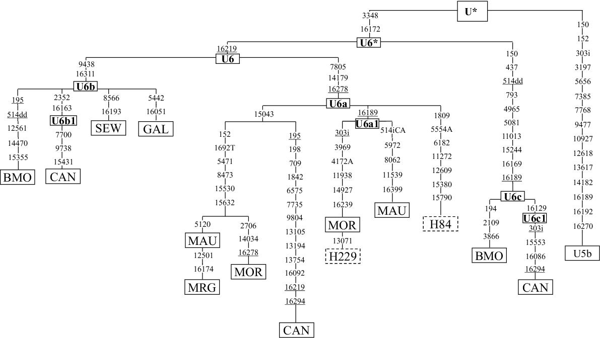 http://static-content.springer.com/image/art%3A10.1186%2F1471-2156-4-15/MediaObjects/12863_2003_Article_64_Fig1_HTML.jpg