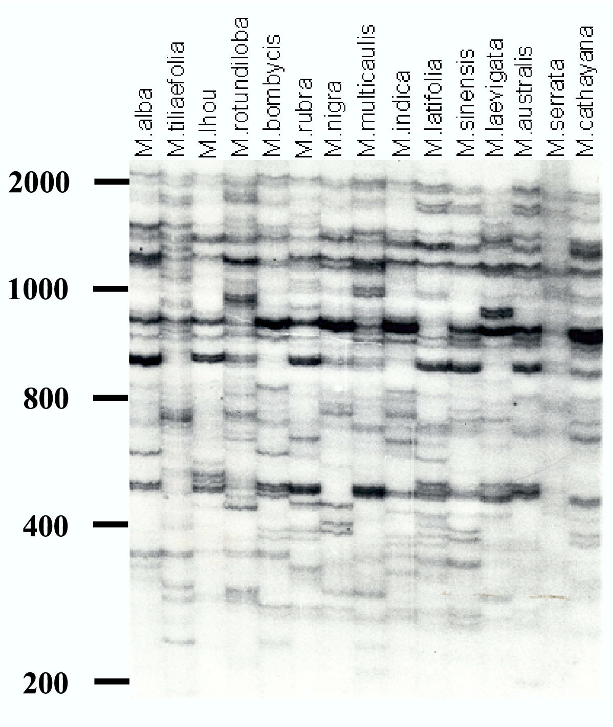 http://static-content.springer.com/image/art%3A10.1186%2F1471-2156-5-1/MediaObjects/12863_2003_Article_173_Fig2_HTML.jpg