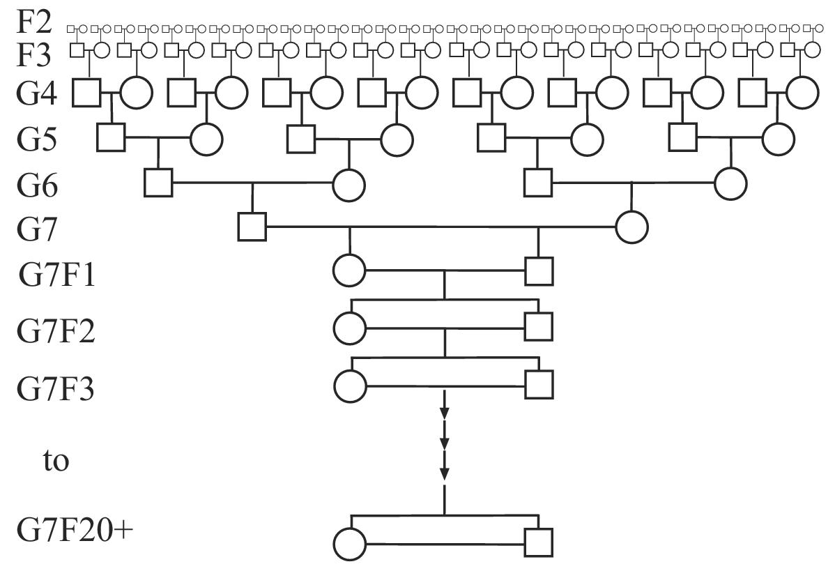 http://static-content.springer.com/image/art%3A10.1186%2F1471-2156-5-7/MediaObjects/12863_2004_Article_179_Fig4_HTML.jpg