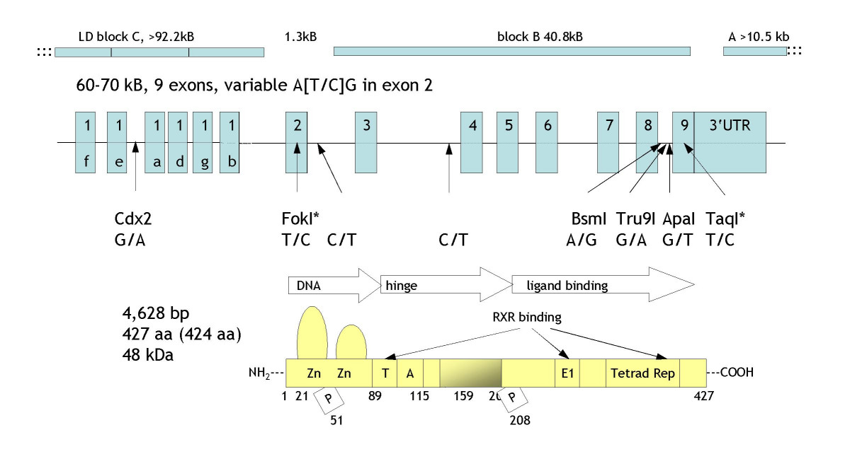http://static-content.springer.com/image/art%3A10.1186%2F1471-2156-6-2/MediaObjects/12863_2004_Article_208_Fig1_HTML.jpg