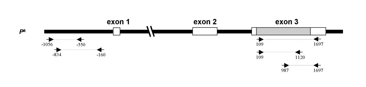 http://static-content.springer.com/image/art%3A10.1186%2F1471-2156-6-49/MediaObjects/12863_2005_Article_255_Fig4_HTML.jpg