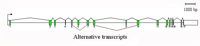 http://static-content.springer.com/image/art%3A10.1186%2F1471-2156-9-7/MediaObjects/12863_2007_Article_573_Fig2_HTML.jpg
