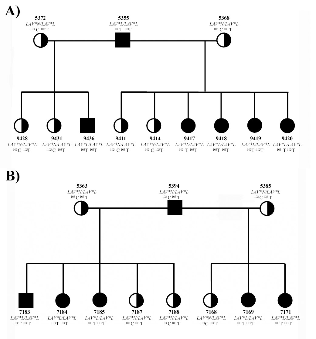 http://static-content.springer.com/image/art%3A10.1186%2F1471-2156-9-7/MediaObjects/12863_2007_Article_573_Fig6_HTML.jpg