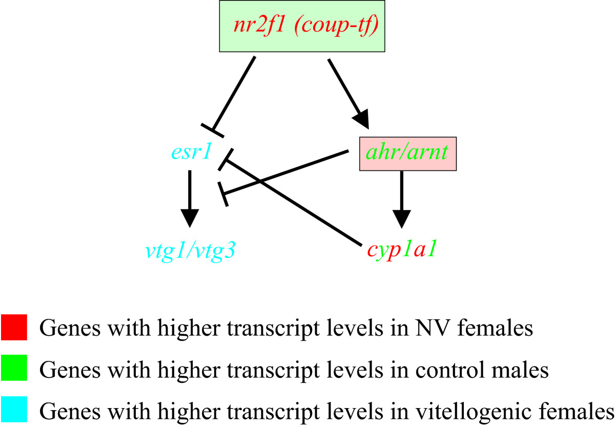 http://static-content.springer.com/image/art%3A10.1186%2F1471-2164-10-141/MediaObjects/12864_2008_Article_2025_Fig10_HTML.jpg