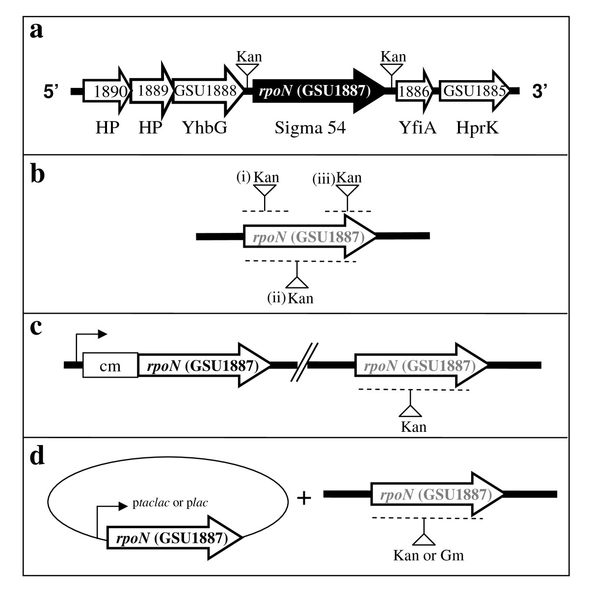 http://static-content.springer.com/image/art%3A10.1186%2F1471-2164-10-331/MediaObjects/12864_2009_Article_2215_Fig1_HTML.jpg