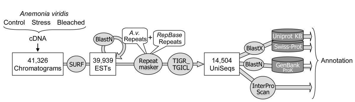 http://static-content.springer.com/image/art%3A10.1186%2F1471-2164-10-333/MediaObjects/12864_2009_Article_2217_Fig1_HTML.jpg
