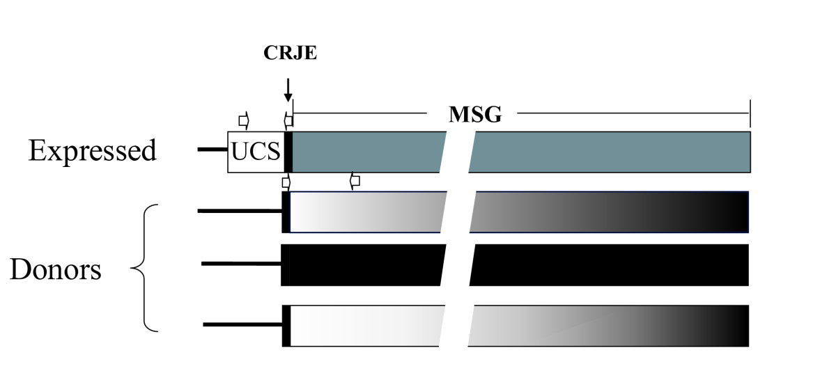 http://static-content.springer.com/image/art%3A10.1186%2F1471-2164-10-367/MediaObjects/12864_2008_Article_2251_Fig1_HTML.jpg
