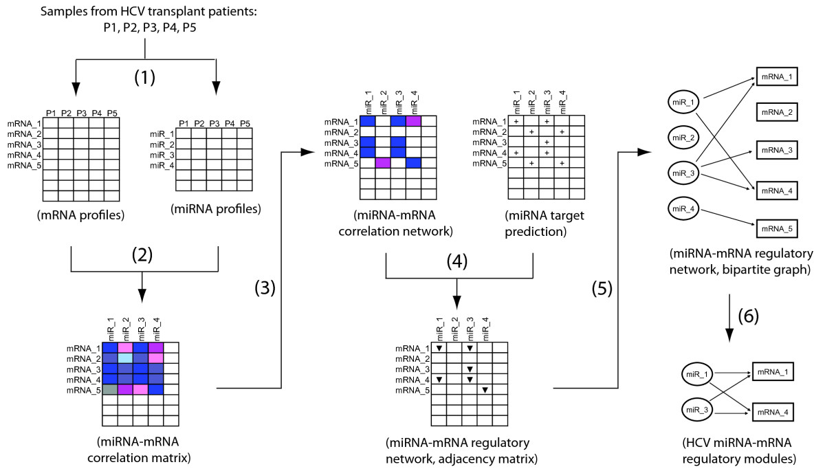 http://static-content.springer.com/image/art%3A10.1186%2F1471-2164-10-373/MediaObjects/12864_2009_Article_2257_Fig1_HTML.jpg