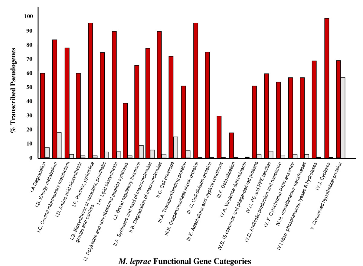 http://static-content.springer.com/image/art%3A10.1186%2F1471-2164-10-397/MediaObjects/12864_2008_Article_2281_Fig2_HTML.jpg