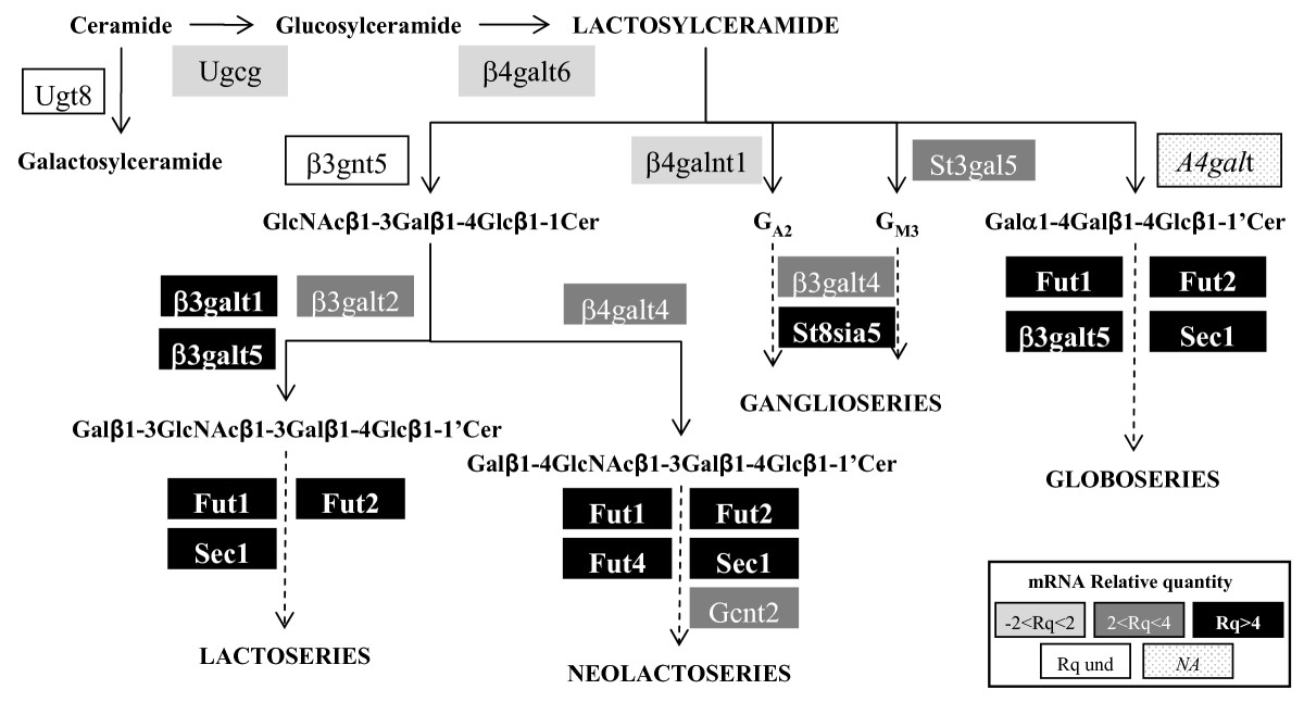 http://static-content.springer.com/image/art%3A10.1186%2F1471-2164-10-483/MediaObjects/12864_2009_Article_2367_Fig4_HTML.jpg