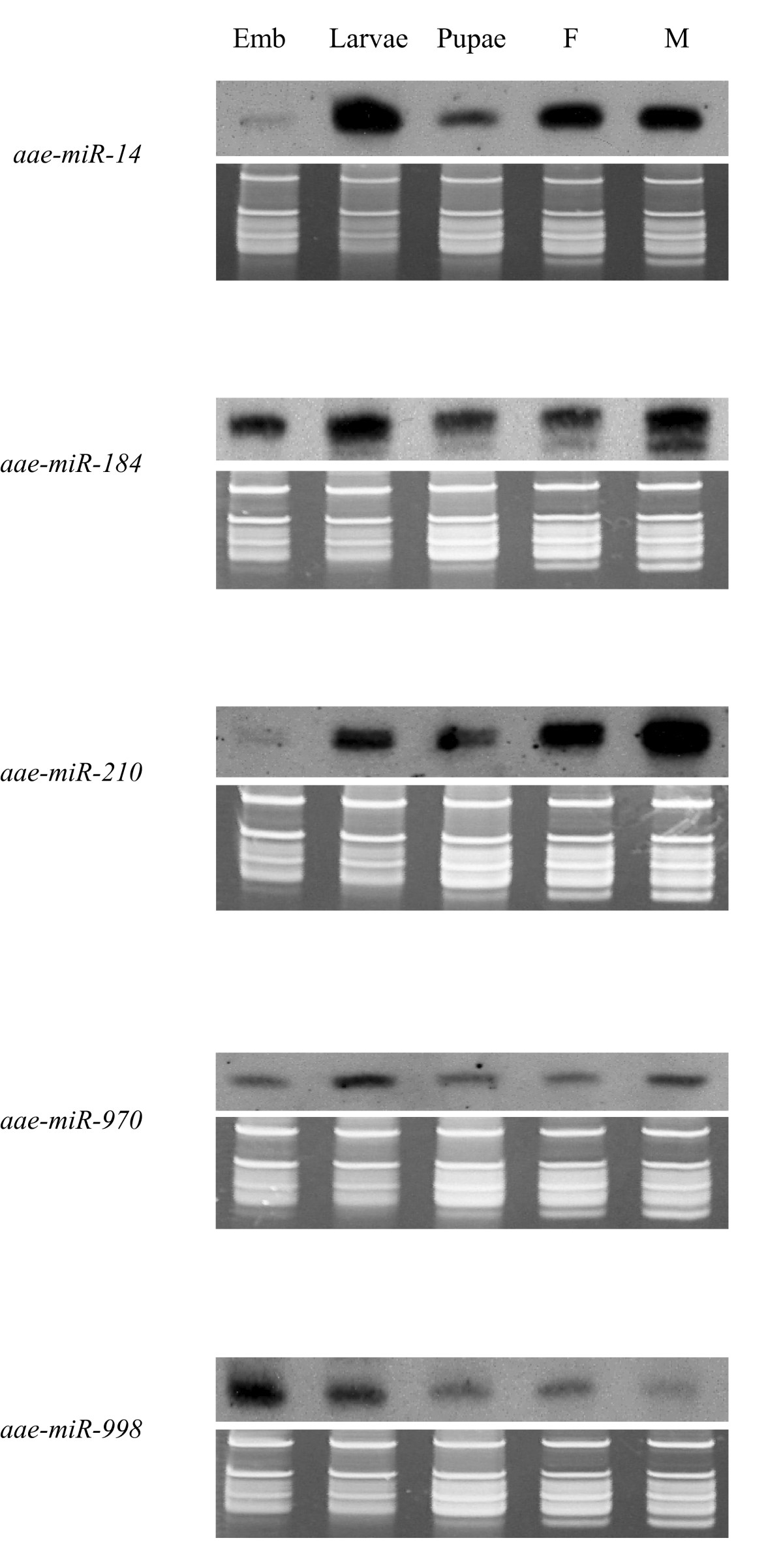 http://static-content.springer.com/image/art%3A10.1186%2F1471-2164-10-581/MediaObjects/12864_2009_Article_2465_Fig3_HTML.jpg
