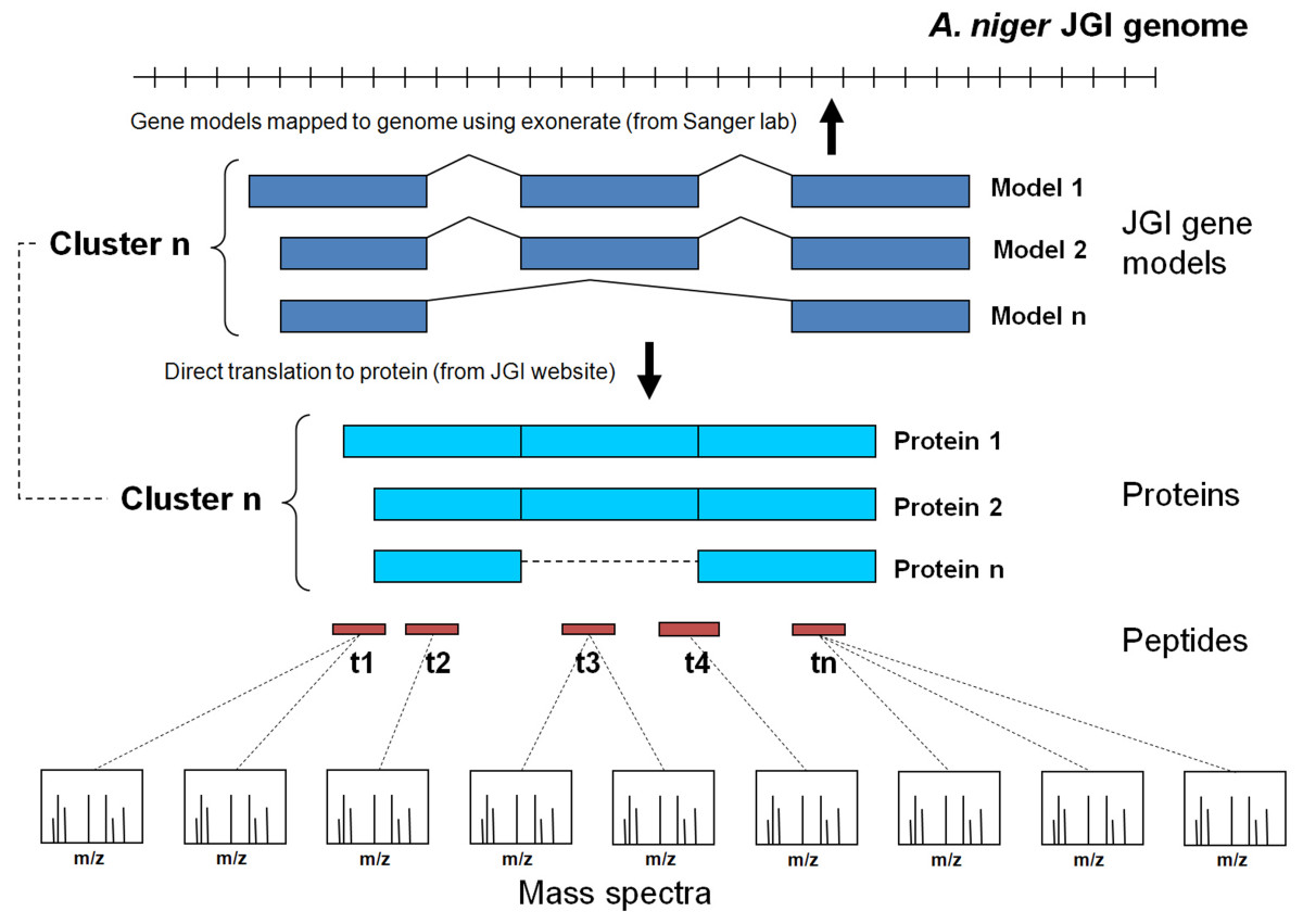 http://static-content.springer.com/image/art%3A10.1186%2F1471-2164-10-61/MediaObjects/12864_2008_Article_1945_Fig2_HTML.jpg