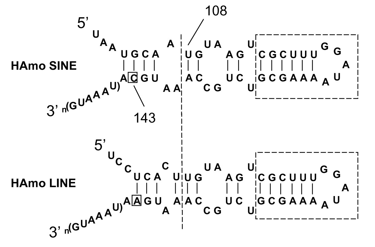 http://static-content.springer.com/image/art%3A10.1186%2F1471-2164-10-83/MediaObjects/12864_2008_Article_1967_Fig9_HTML.jpg