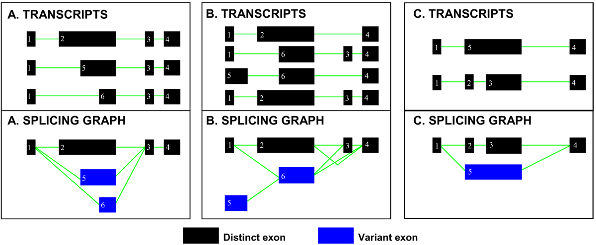 http://static-content.springer.com/image/art%3A10.1186%2F1471-2164-10-S1-S5/MediaObjects/12864_2009_Article_2533_Fig2_HTML.jpg