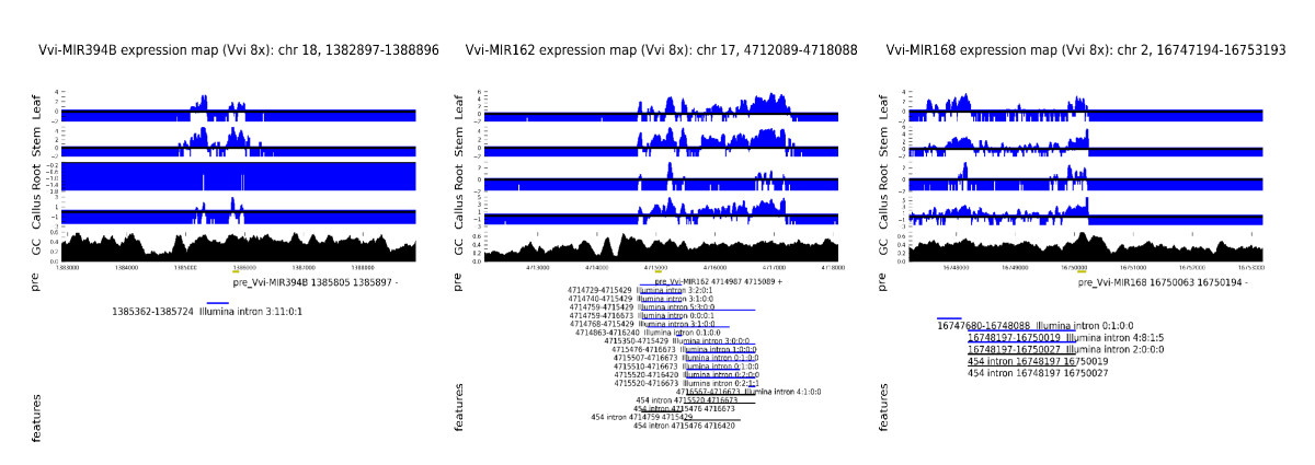 http://static-content.springer.com/image/art%3A10.1186%2F1471-2164-11-109/MediaObjects/12864_2010_Article_2703_Fig3_HTML.jpg
