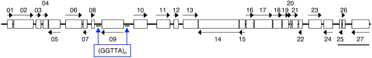http://static-content.springer.com/image/art%3A10.1186%2F1471-2164-11-141/MediaObjects/12864_2009_Article_2735_Fig1_HTML.jpg