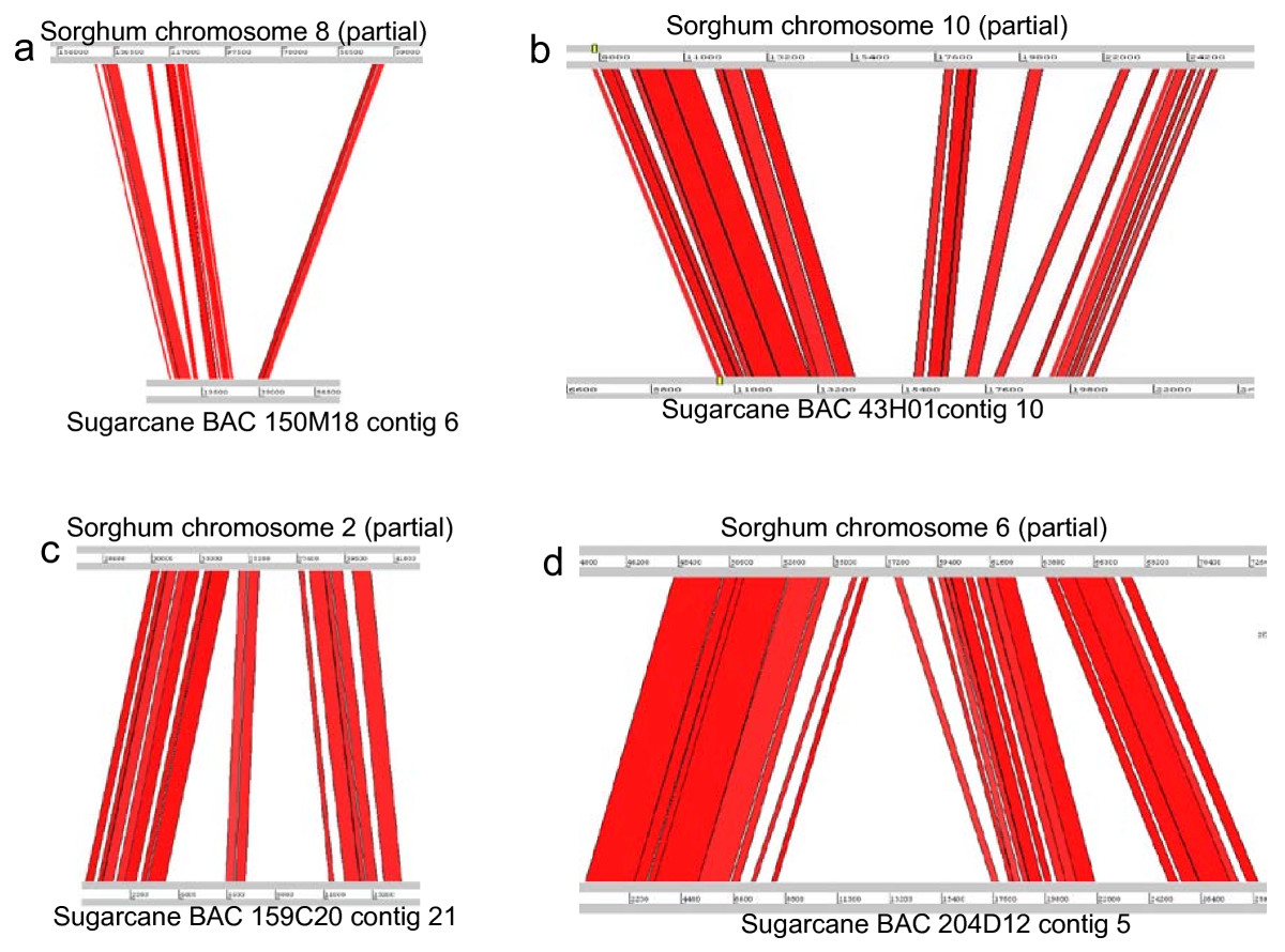 http://static-content.springer.com/image/art%3A10.1186%2F1471-2164-11-261/MediaObjects/12864_2009_Article_2855_Fig4_HTML.jpg