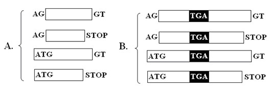 http://static-content.springer.com/image/art%3A10.1186%2F1471-2164-11-289/MediaObjects/12864_2009_Article_2883_Fig2_HTML.jpg