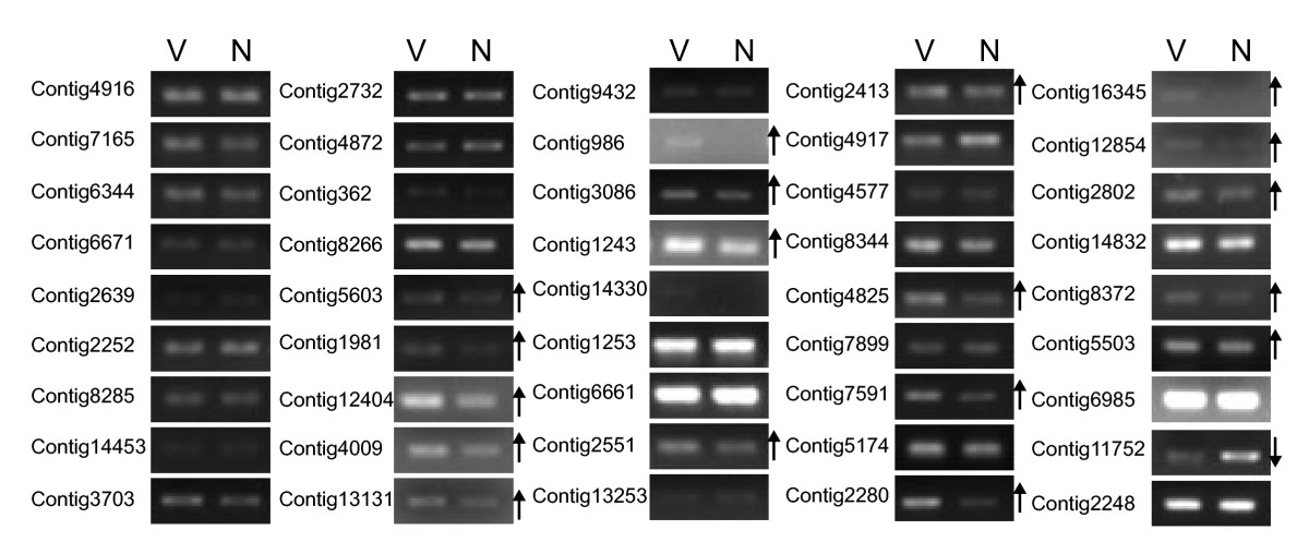http://static-content.springer.com/image/art%3A10.1186%2F1471-2164-11-303/MediaObjects/12864_2010_Article_2897_Fig4_HTML.jpg