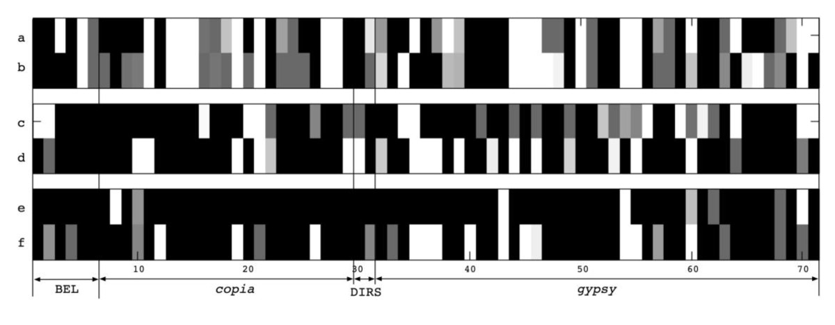 http://static-content.springer.com/image/art%3A10.1186%2F1471-2164-11-425/MediaObjects/12864_2009_Article_3019_Fig3_HTML.jpg