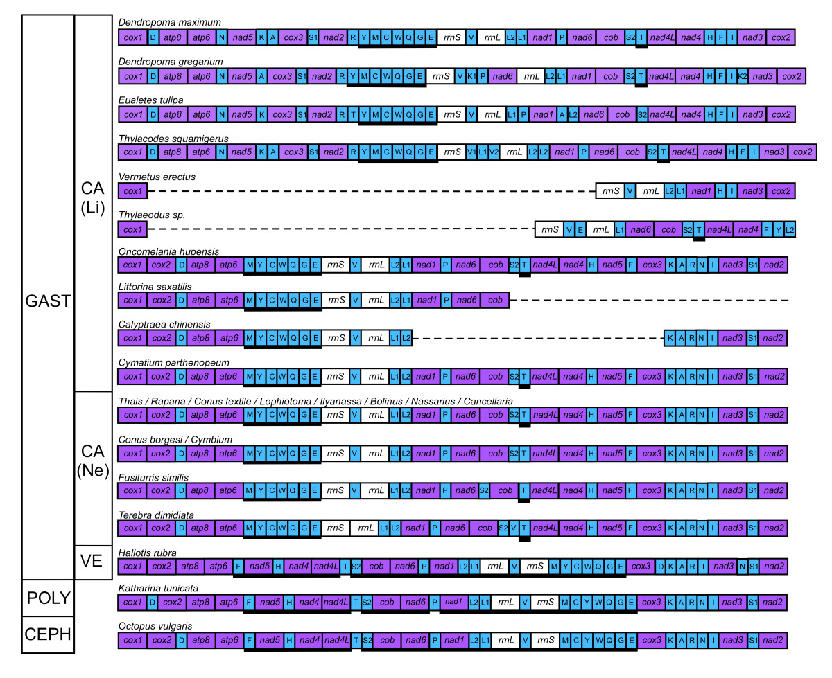 http://static-content.springer.com/image/art%3A10.1186%2F1471-2164-11-440/MediaObjects/12864_2010_Article_3034_Fig5_HTML.jpg
