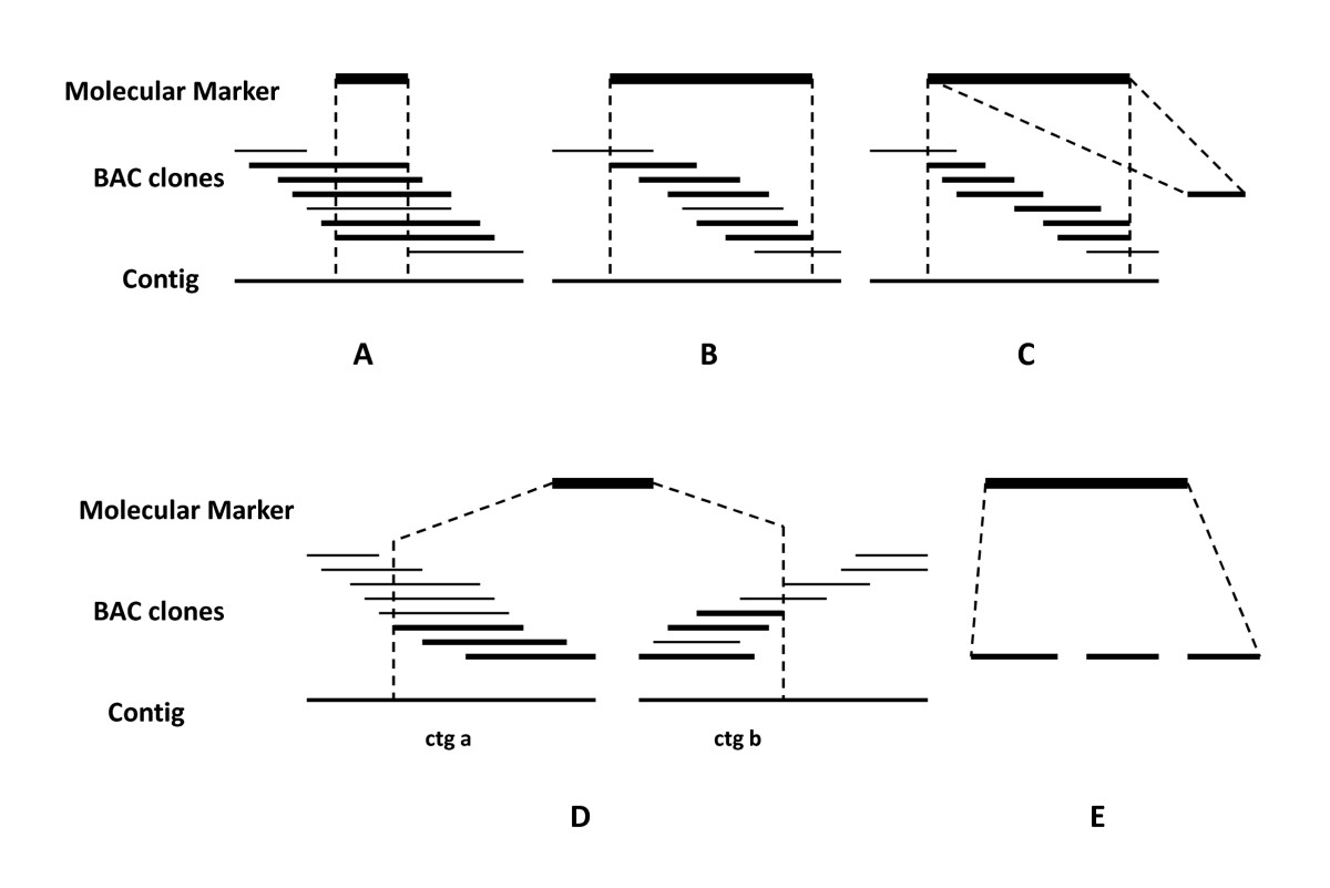 http://static-content.springer.com/image/art%3A10.1186%2F1471-2164-11-692/MediaObjects/12864_2010_Article_3389_Fig4_HTML.jpg