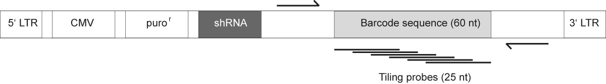 http://static-content.springer.com/image/art%3A10.1186%2F1471-2164-11-7/MediaObjects/12864_2009_Article_2601_Fig1_HTML.jpg